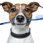 how to make dog toothpaste from an Indianapolis Dentist